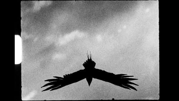 dessins animés vidéo grahiste animation composing riberaigua 1 vol oiseau